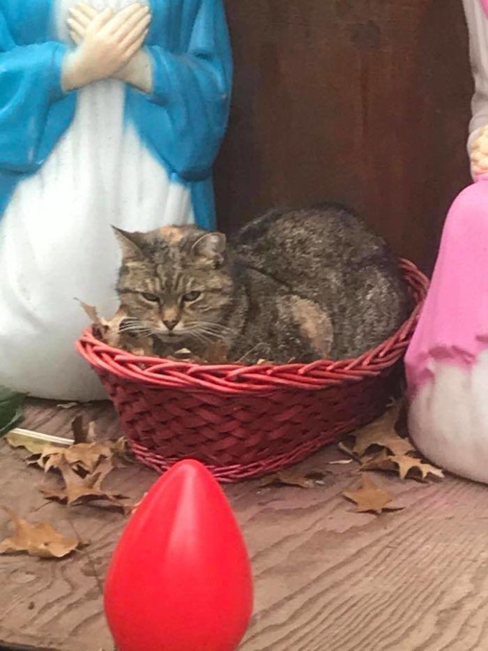 belen-gato