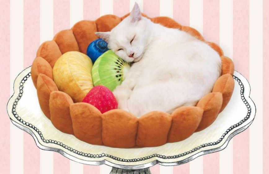cama-para-gatos