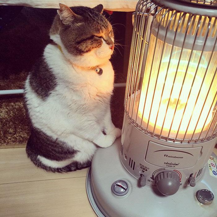 gato-estufa