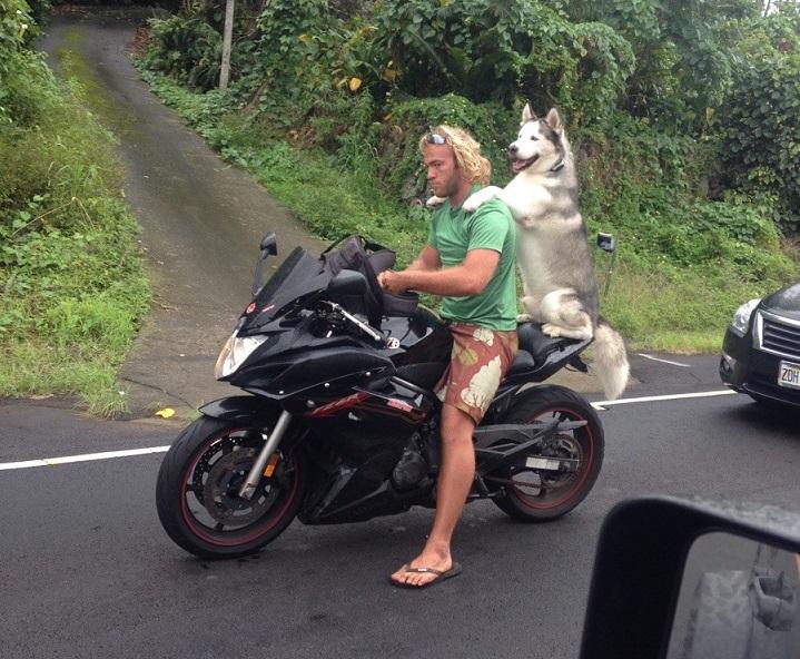 husky-en-moto