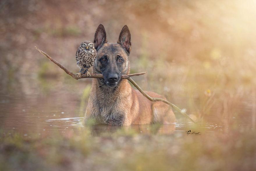 perro-y-buho
