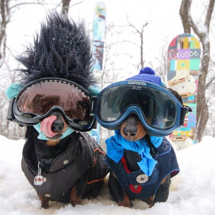 perros-snow