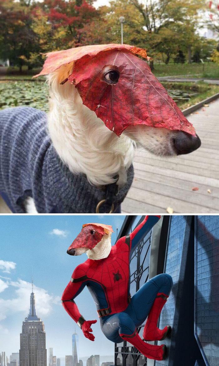 photoshop-de-un-perro-con-mascara