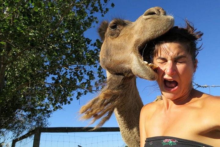 selfie-camello