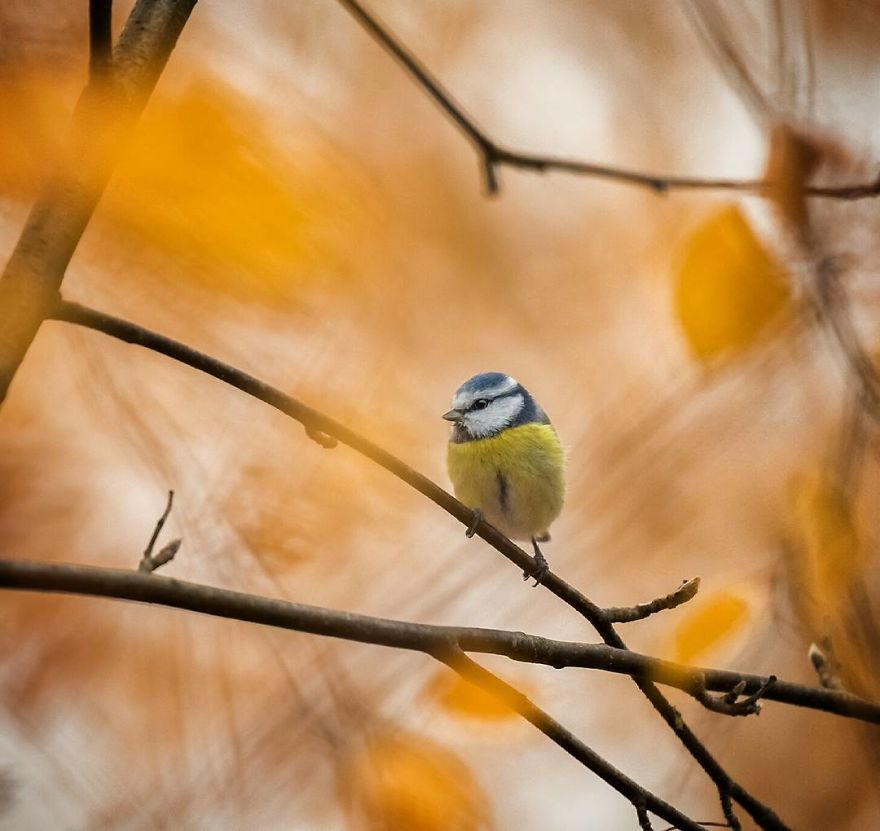 pajaros-Angry-Birds-reales