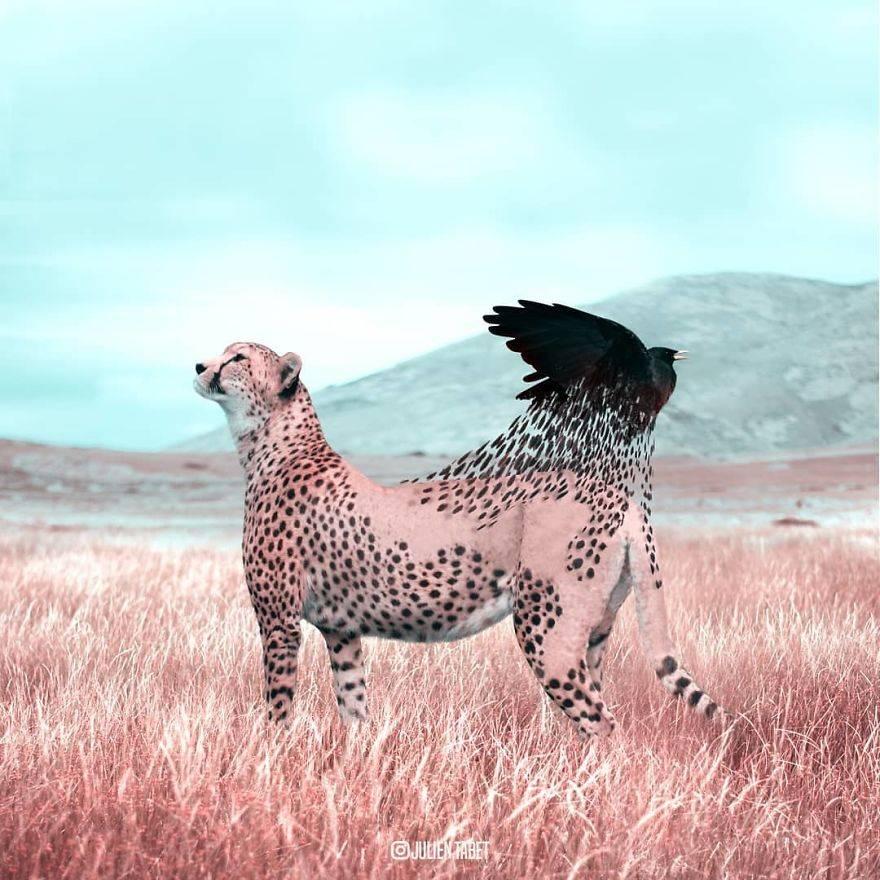 animales-originales