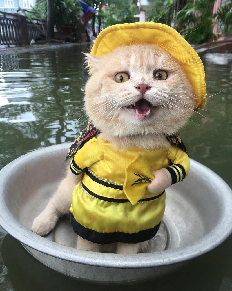 gato-disfrazado