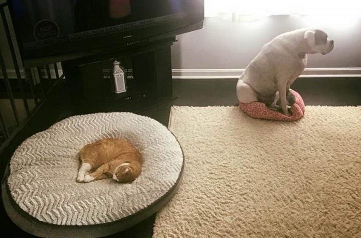 un-clasico-entre-perro-y-gato