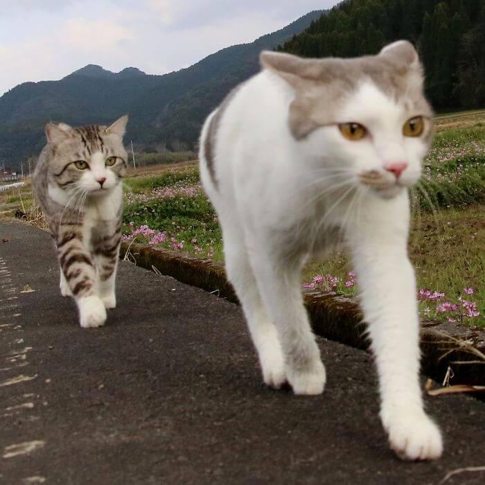gato-fotogenico