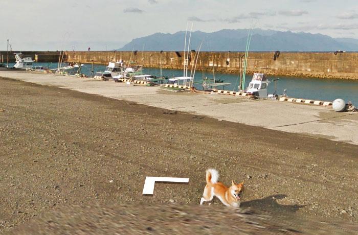 perro-Google-Street-View