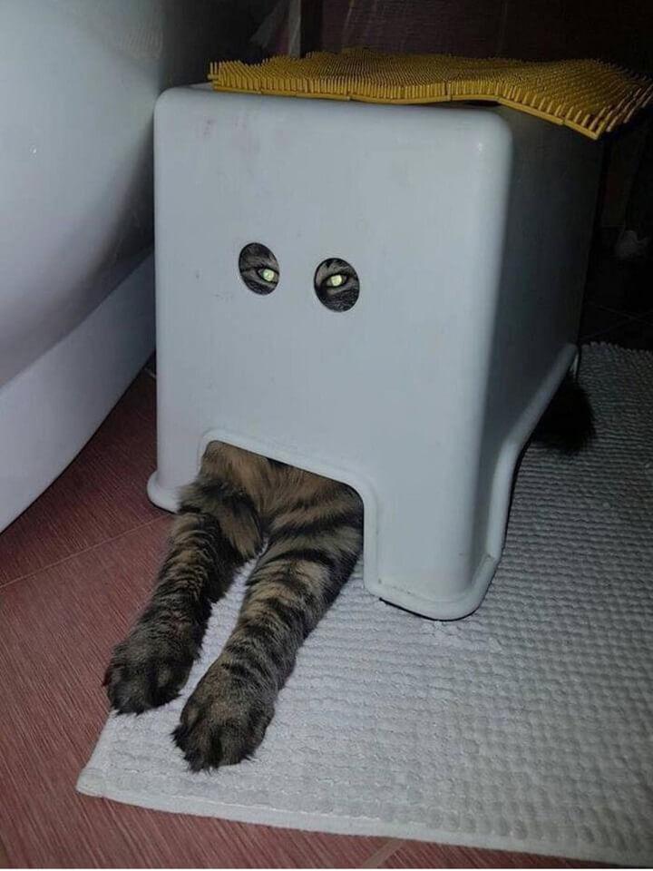 gato-en-modo-camuflaje