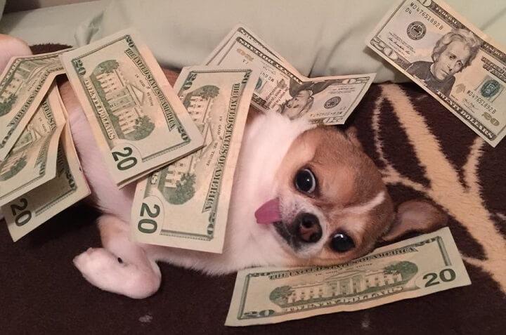 perro-millonetis