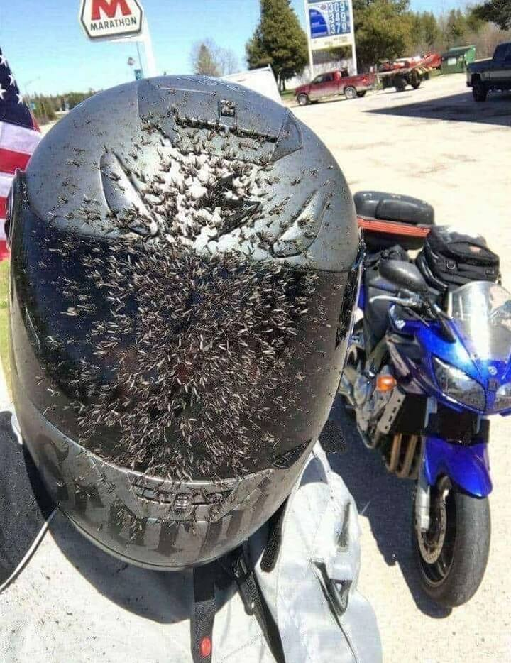 motorista-matamosquitos