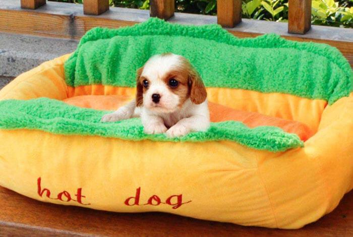 cama-perrritos-calientes