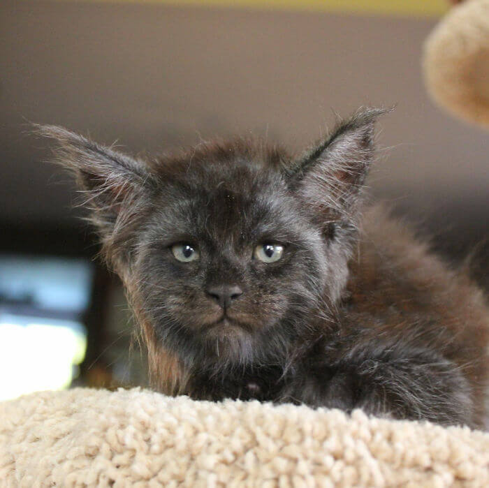 gato-cara-persona