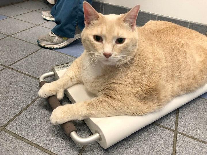 gato-de-15-kilos