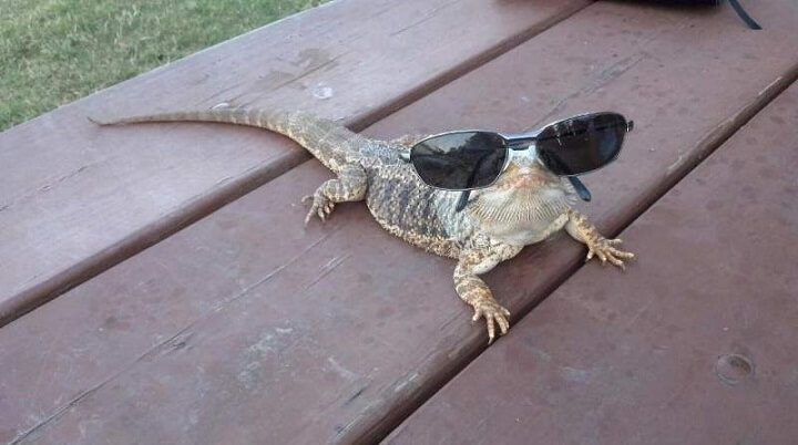 iguana-verano