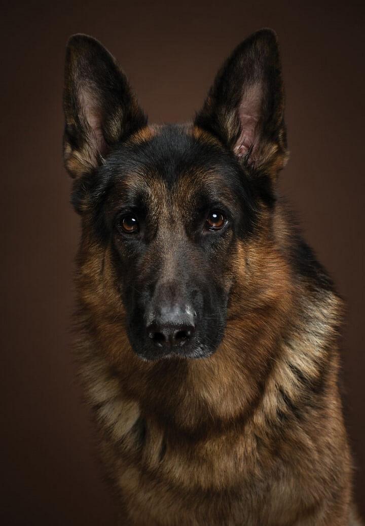 perro-expresivo