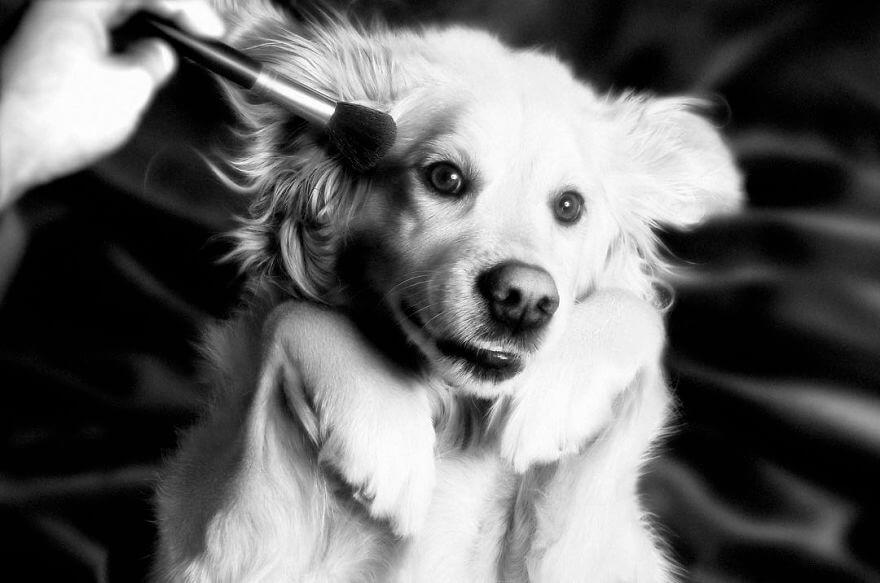perro-madonna