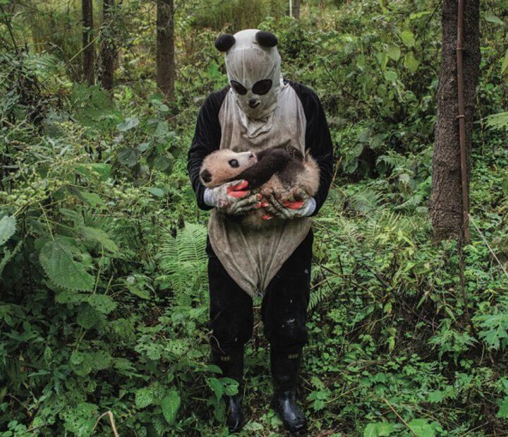 Ami-Vitale-pandas