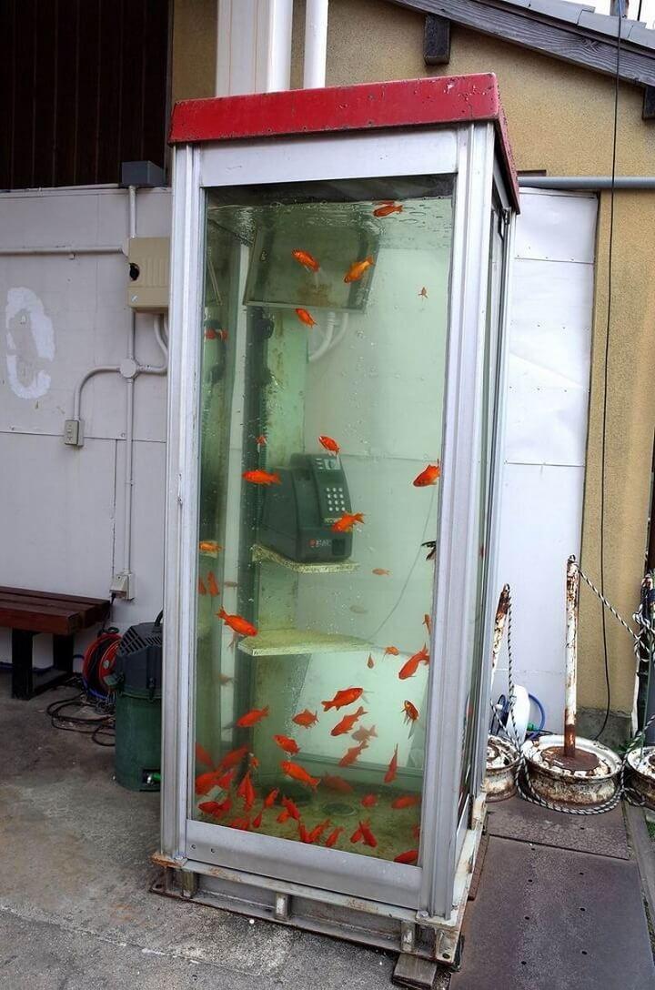 cabina-telefonica-pecera