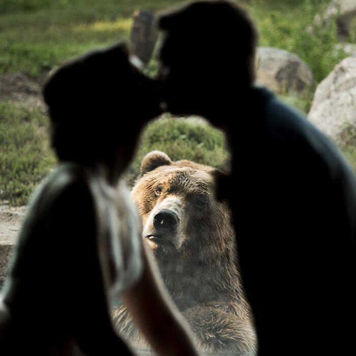 oso-boda