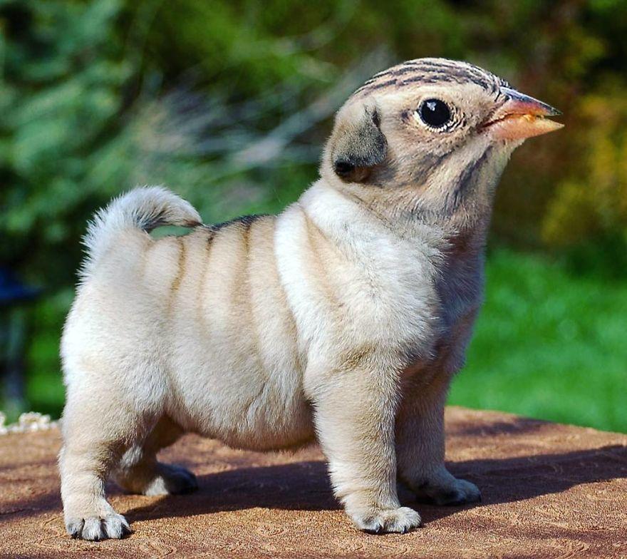 fotomontaje-animal-hibrido