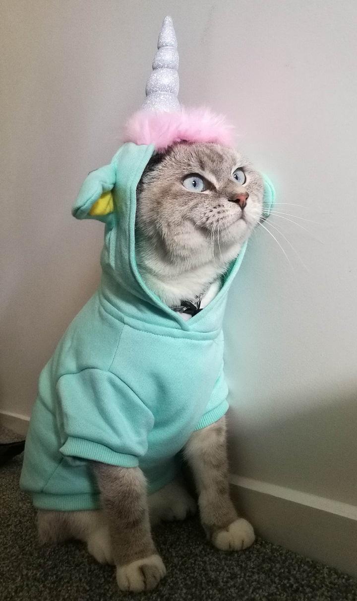 gato-disfrazado-de-unicornio