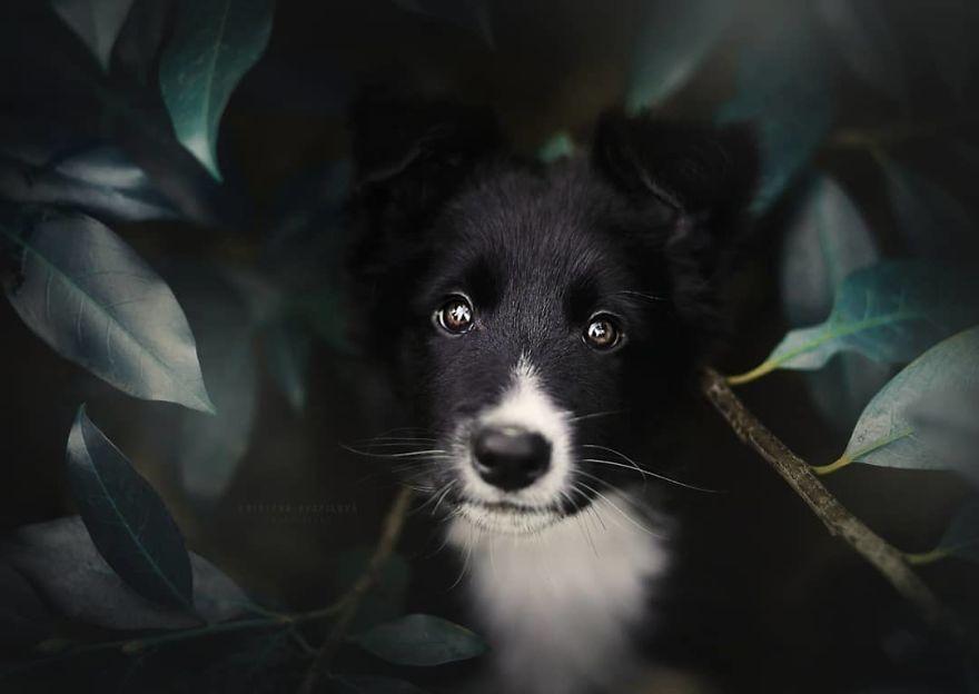 foto-perro