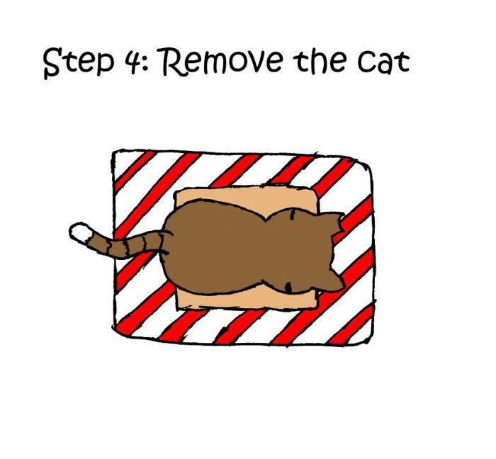 gato-regalo
