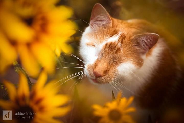 gato-ciego
