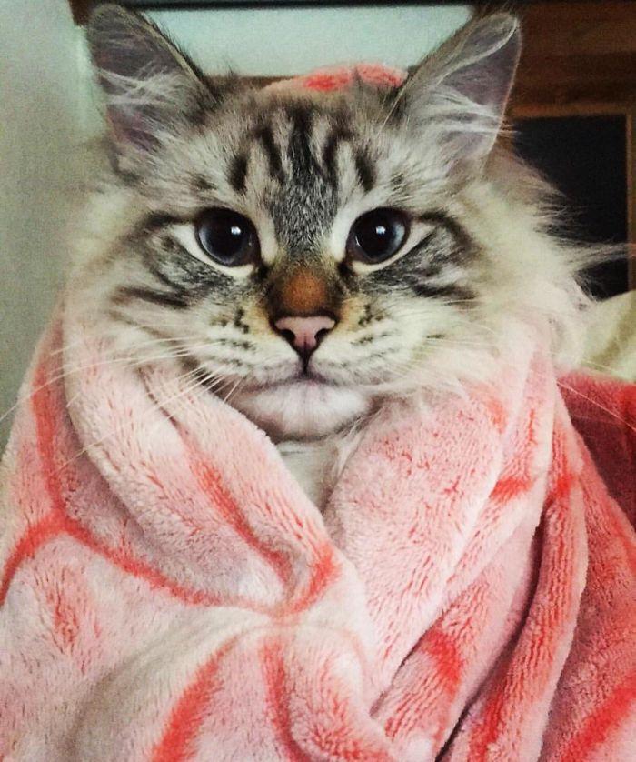 gatos-unicos