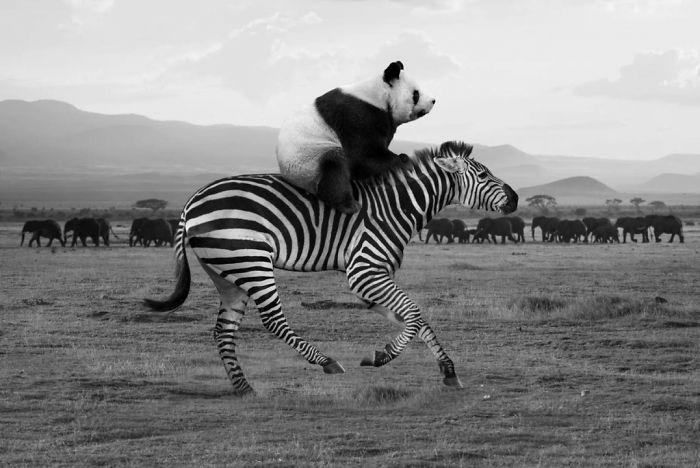 animales-Photoshop