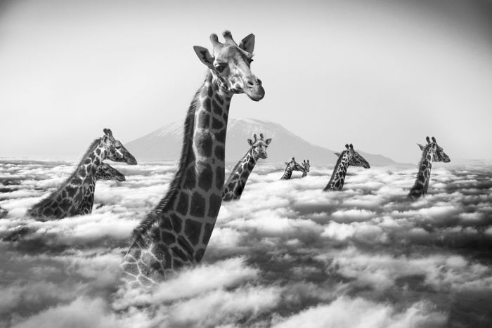 finest selection 2917f 3f23d animales-Photoshop