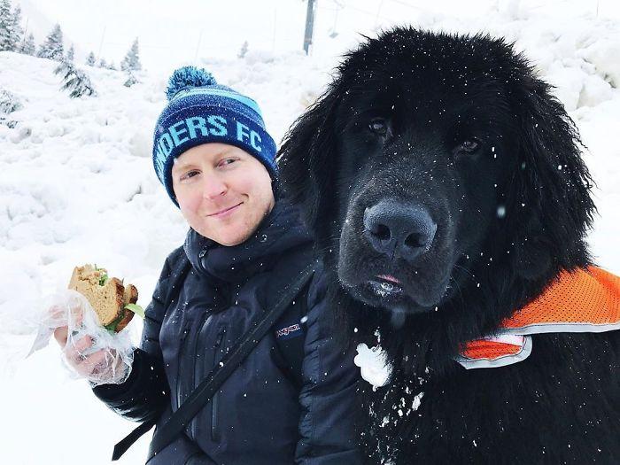 el-enorme-perro-Terranova