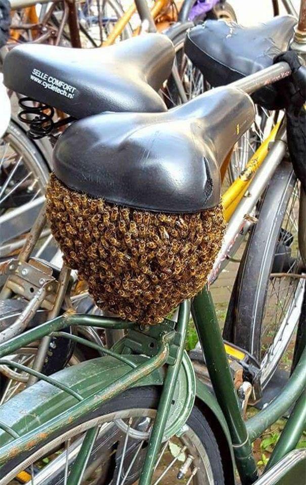bicicleta-panal-de-abejas