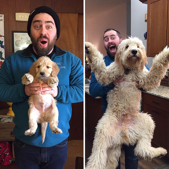 los-perros-crecen