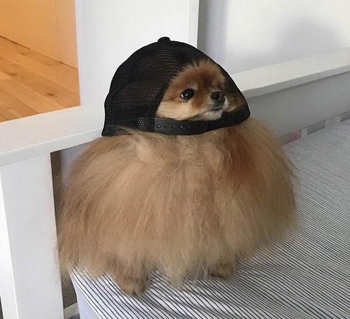 perro-con-gorra