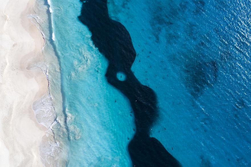 tiburones-playa