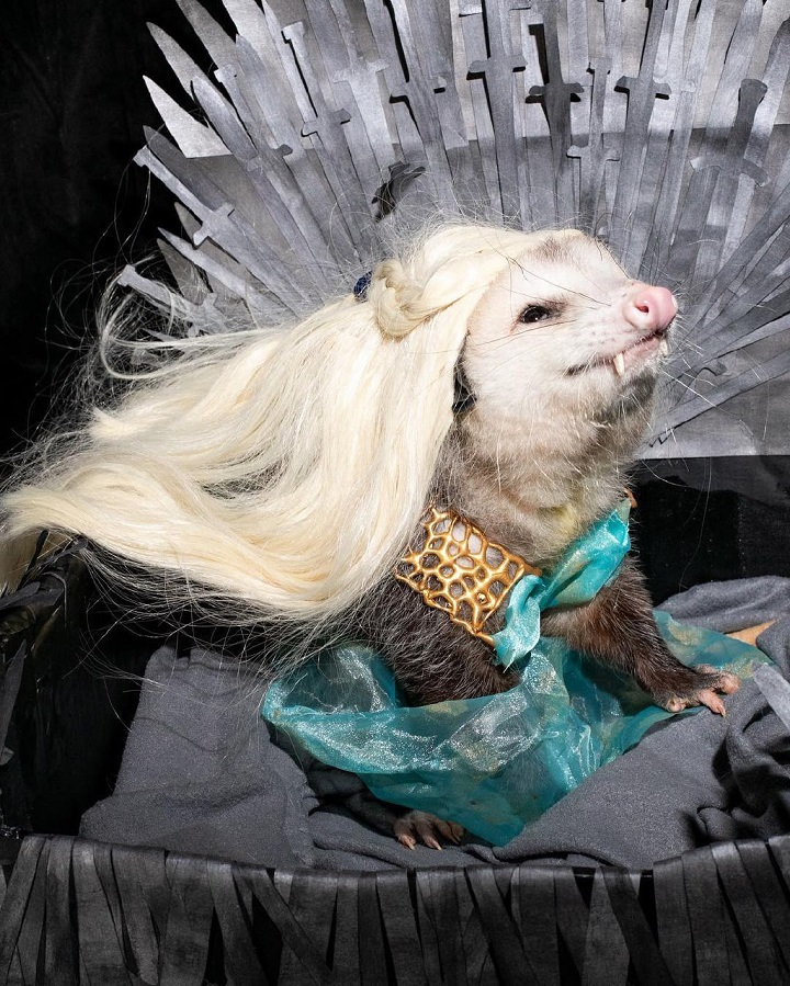 Khaleesi-quiere-el-trono-de-hierro