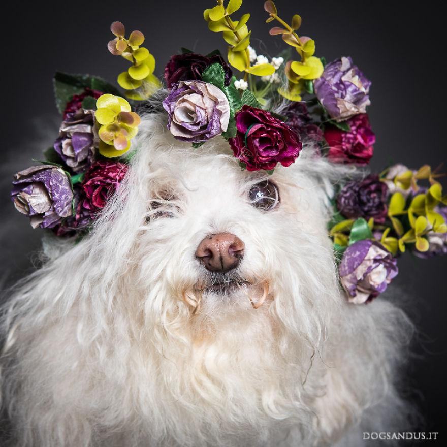 expresiones-perros