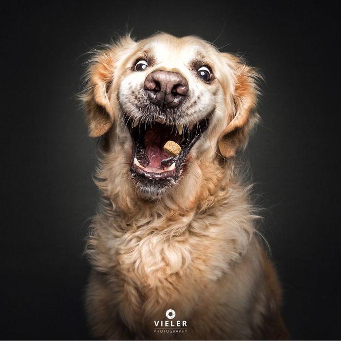 perro-comida