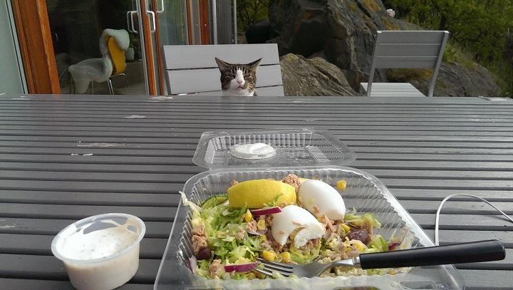 gato-ensalada