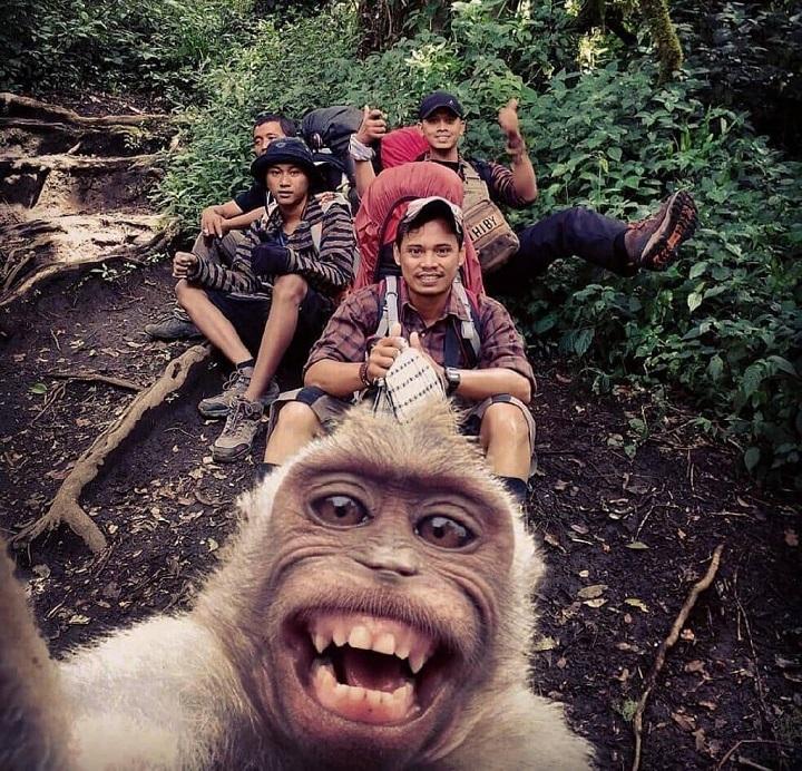 mono-haciendo-un-selfie
