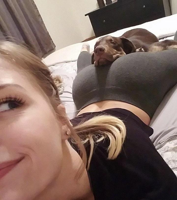 perro-descansando-en-un-lugar-arriesgado