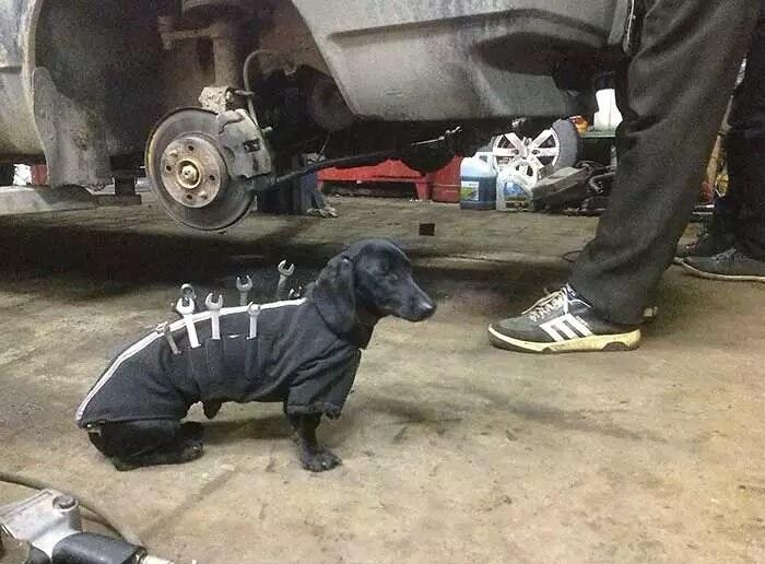 perro-mecanico