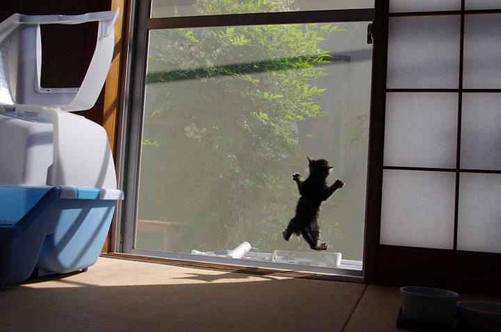 gato-con-ganas-de-salir-a-la-calle