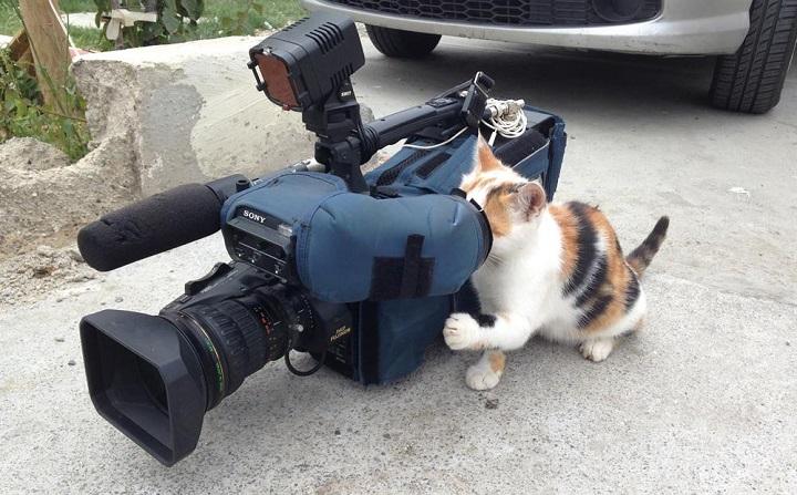 gato-reportero