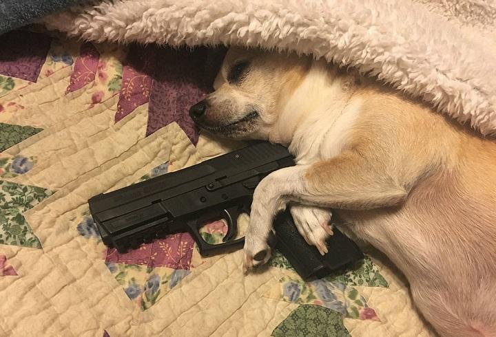 perro-guardian