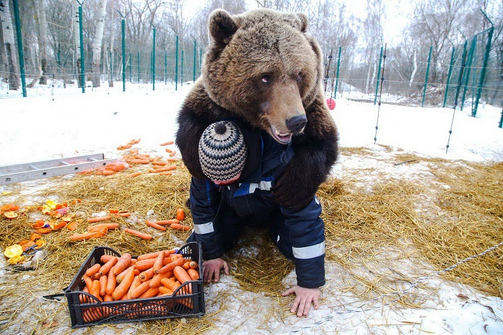 el-abrazo-del-oso